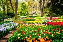 parc-floral