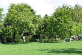 jardin-arbre